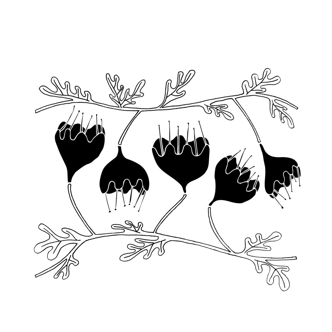 Flores ilustración Blaurtopías